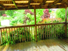 The deck and some of the beautiful nature in our yard