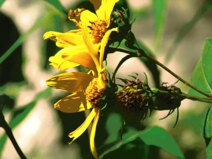 "Photo: ""Full Bloom"" by PocahontasBrandy, 2013"