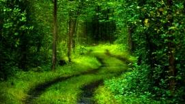 2e170-path-of-nature-wallpaper