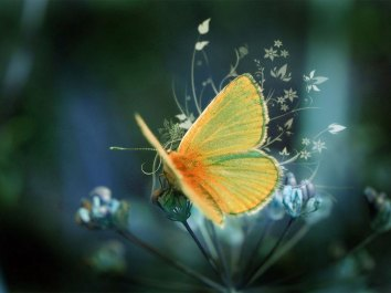 wallpaper desktop-nacozinhacomamalves_blogspot_com-moth_-_desktop_wallpaper