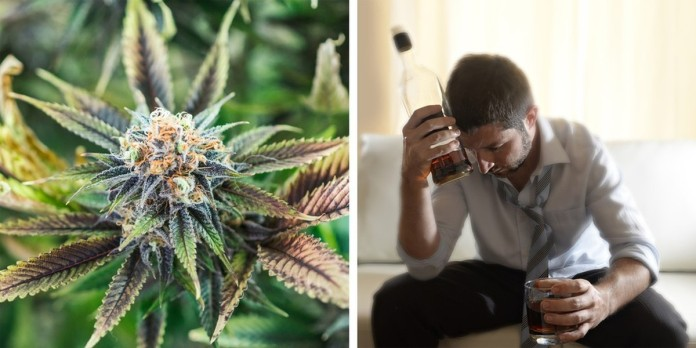 Image result for New Research Says Marijuana Is 114 Times Safer Than Drinking Alcohol