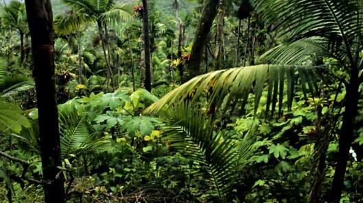 amazon-rainforest-trees