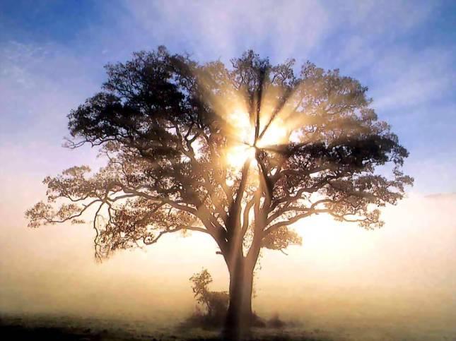 treeofrighteousness2