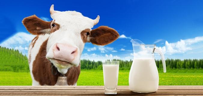 animals-cattle-milk-735-350