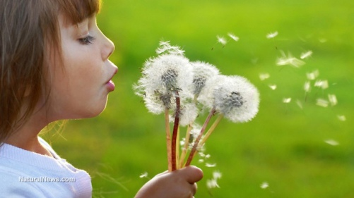 girl-dandelion-healthy