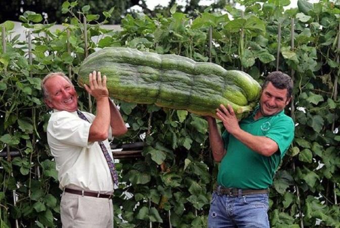 Supernatural Gardner Grows 100 Pound Vegetables Regularly