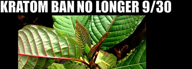 Kratom Ban No Longer 9/30: DEA Says Timetable Indefinite