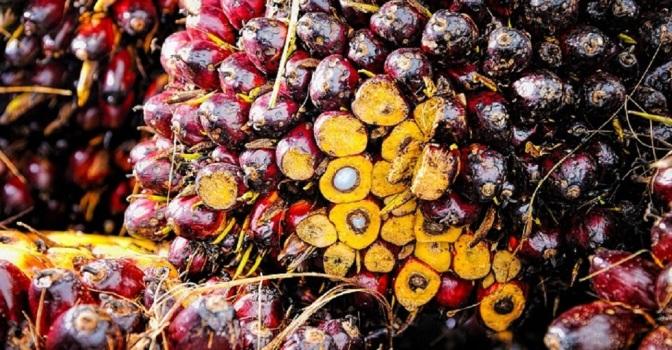 Human Rights Report Slams Major Food Companies over Child Labor Abuses