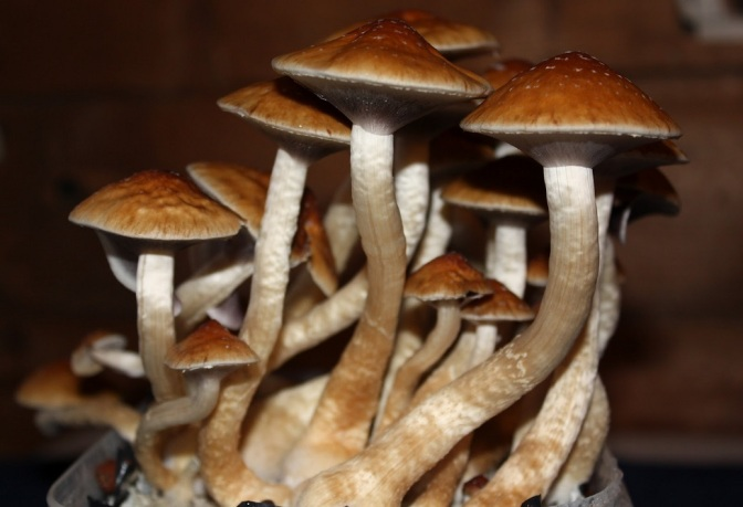 Psychological and Spiritual Benefits of Psilocybin
