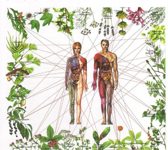 healing-the-seven-chakras-with-herbs-620