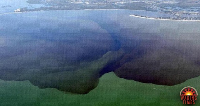 Florida's Largest Lake is Now a Toxic Wasteland, a Victim of Politics as Usual