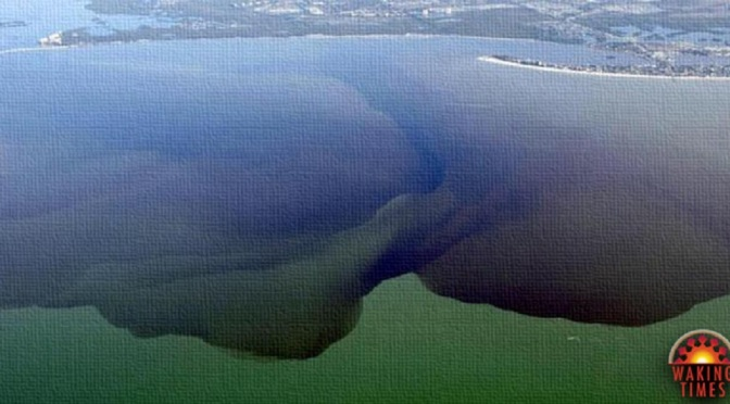 Florida's Largest Lake is Now a Toxic Wasteland, a Victim of Politics as Usual Toxic-water-1