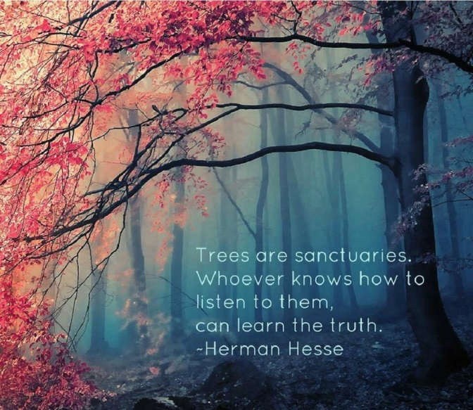 Speak to the Trees – A Spiritual Perspective on Nature