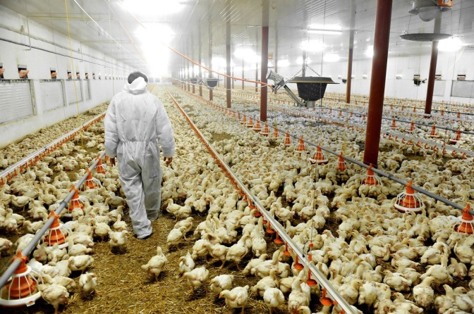 """New Report: There Is No Such Thing As """"Free Range"""" Eggs"""