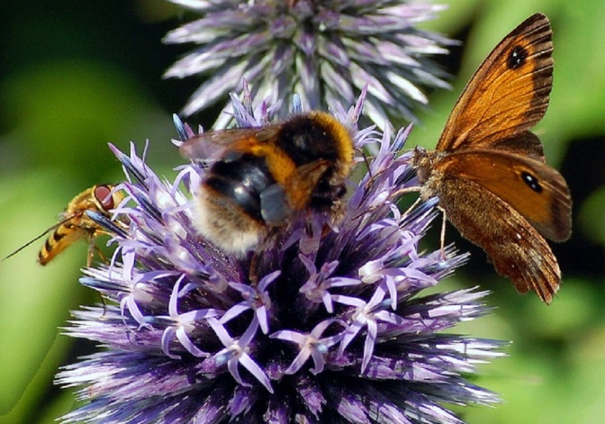 Iowa City Carves 1000 Acres to Seed Habitat Rescue for Bees and Butterflies