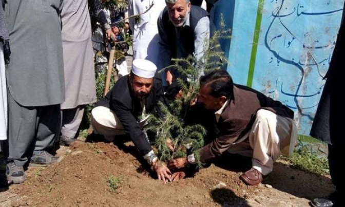 Pakistani Province Celebrates Planting 750 Million Trees Since 2015