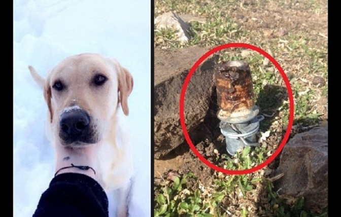Idaho Family Outraged After USDA-Planted Cyanide Bomb Injures Kid, Kills Dog