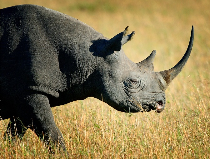 Poachers Break Into Zoo In Paris And Kill A Rhino For Its Horn