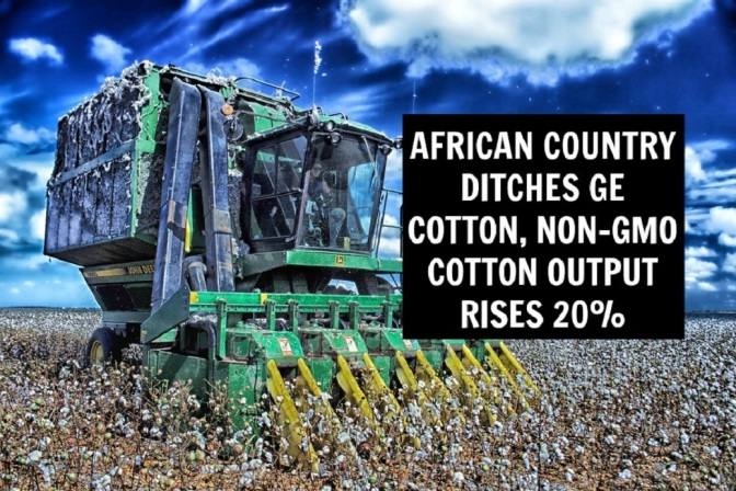 African Country Ditches GE Cotton, Non-GMO Cotton Output Rises 20 Percent