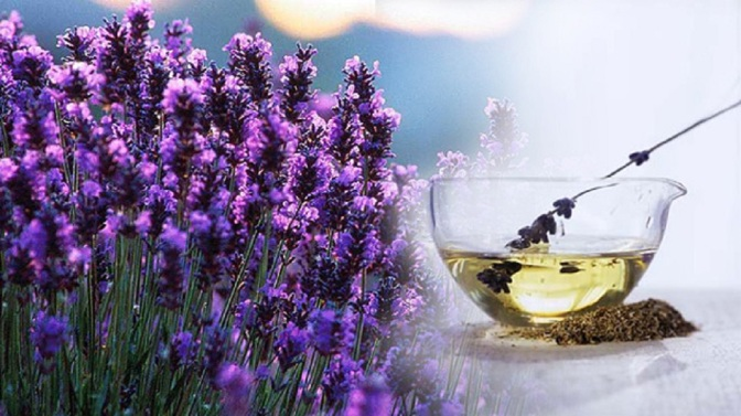 All About Lavender Oil: It's Benefits, Uses and How to Make Your Own