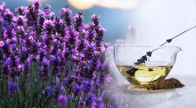 All About Lavender Oil: It's Benefits, Uses and How to Make Your Own Lavender-oil-beenfits