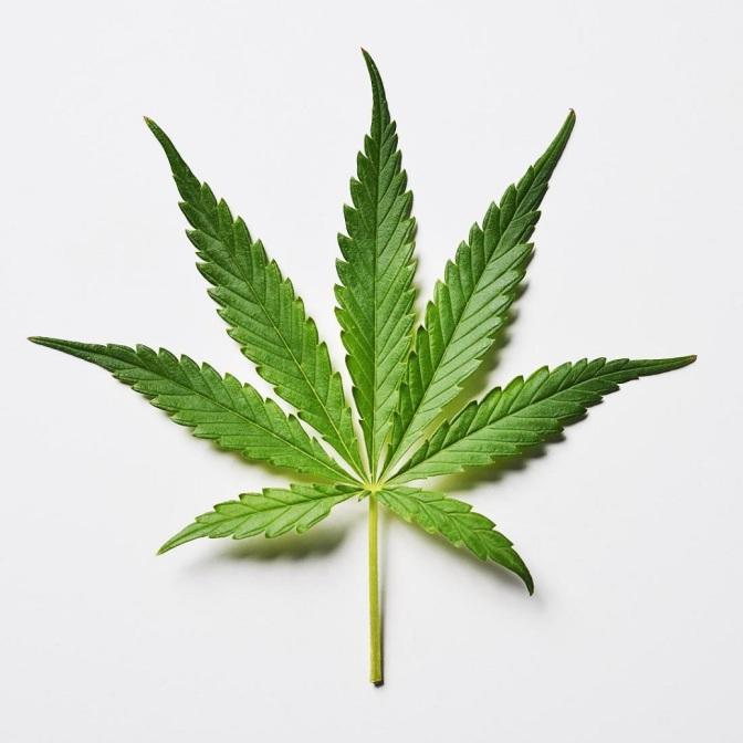 Texas House of Representatives Considering Decriminalizing Marijuana
