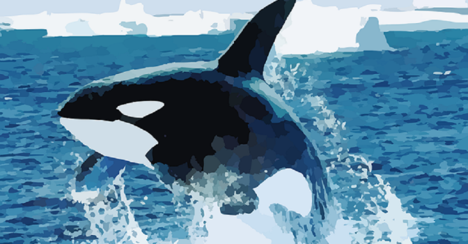 "Monsanto Chemical May Leave Orca Pod ""Doomed to Extinction"""