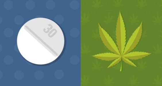 states-with-medical-marijuana-laws-have-lower-rates-of-opioid-related-deaths-study-finds-fb1-800x429