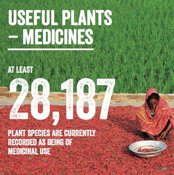 plants-as-medicine