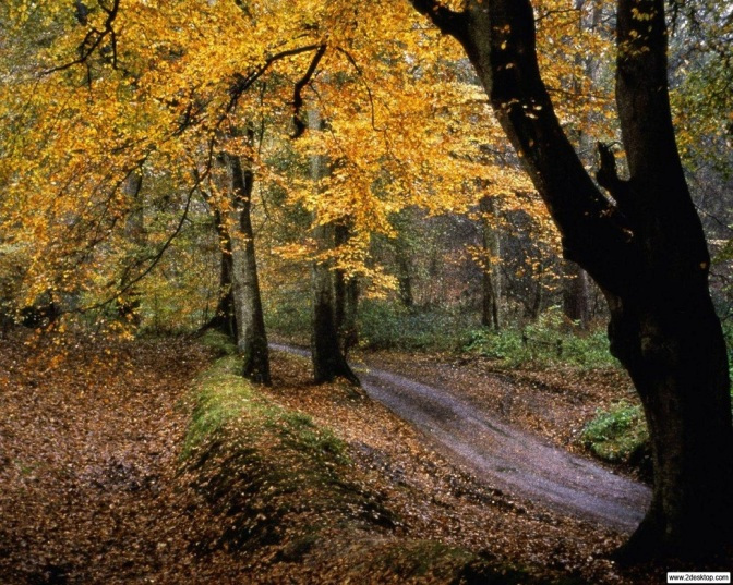The Path Less Traveled… And How To Tackle It