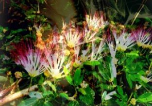 3-wild-herbs-for-lucid-dreaming-350x245