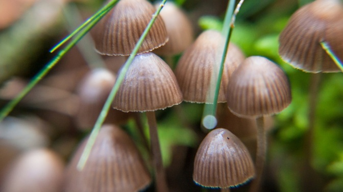 Magic Mushrooms May Hold Key to Long-Term Relief from Anxiety and Depression