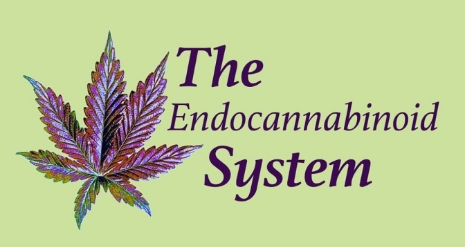 8 Amazing Facts About the Endocannabinoid System – and Why We Should Tell the World About It