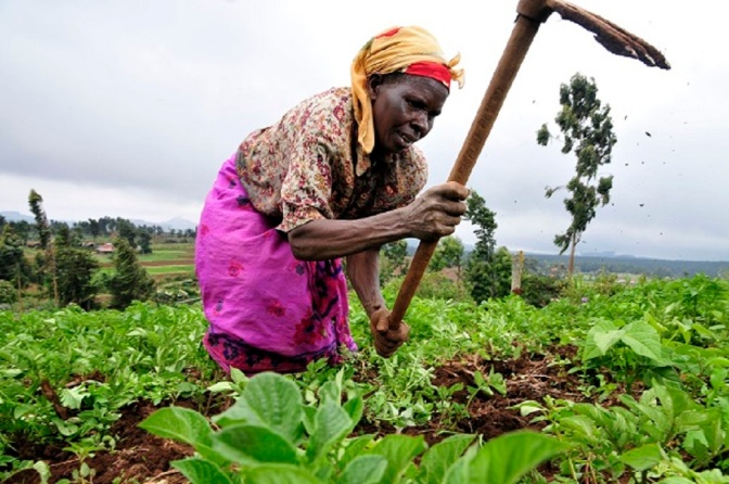 Call to Stop Using Africans As GMO Guinea Pigs