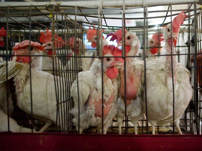 Why You Should Care About the Meat Industry – Part 3/3