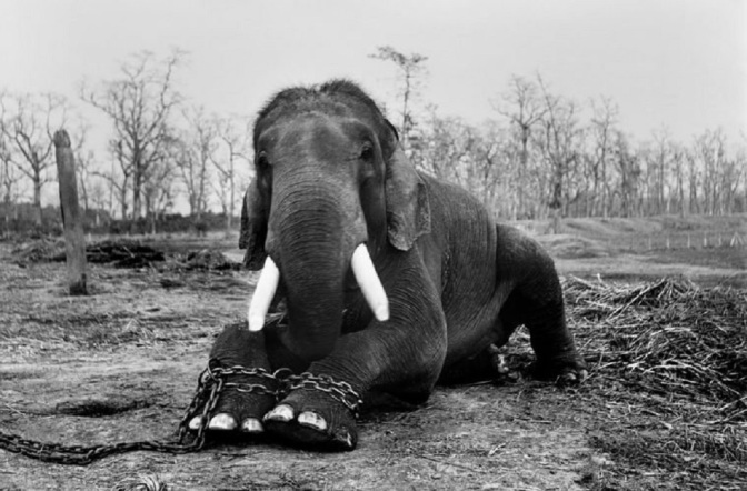 International Group Of Award Winning Photographers Came Together To Expose The Illegal Wildlife Trade