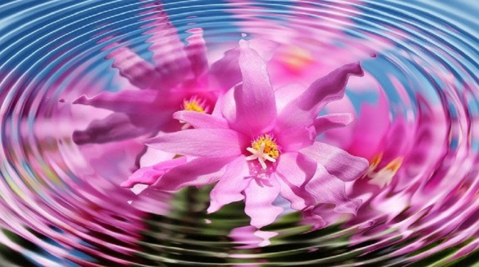 How The Vibration Of A Flower Can Provide Energy Healing