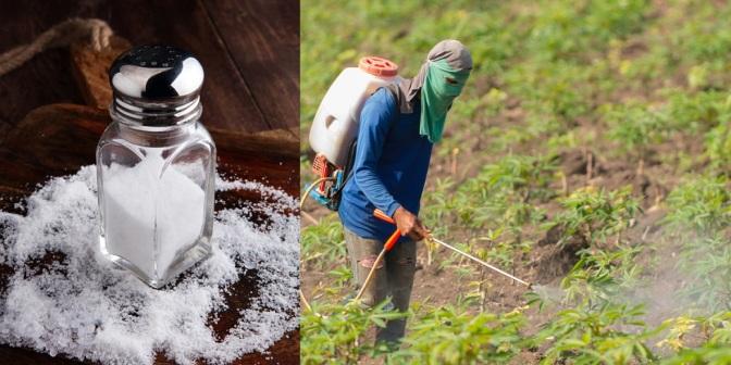 Latest GMO Propaganda: Roundup is Less Toxic Than Table Salt