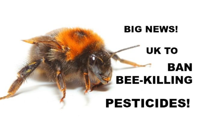 UK Will Back Full Ban on Bee-Killing Pesticides