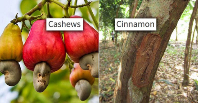 12 Weird Foods – No One Knows How They Are Grown