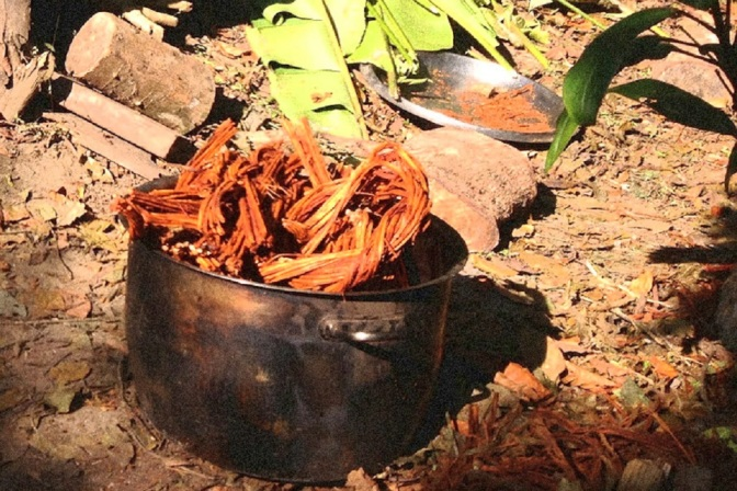Understanding the Dieta Protocol for Participating in Ayahuasca Ceremonies