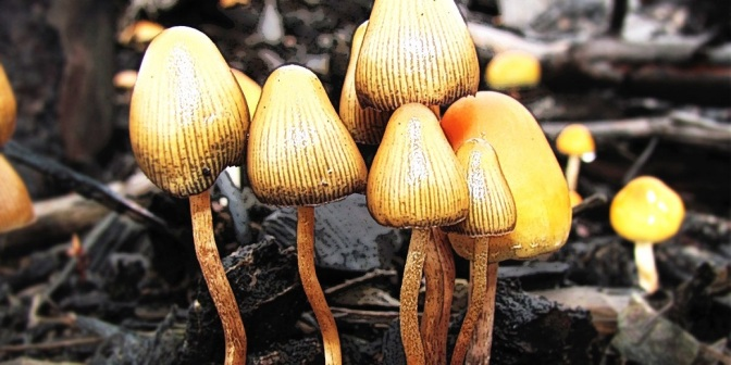 Study: 'Magic Mushrooms' Reduce Authoritarianism, Enhance Connectedness With Nature