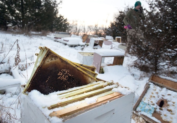 Two Teen Boys in Iowa Charged With Killing Half a Million Honeybees