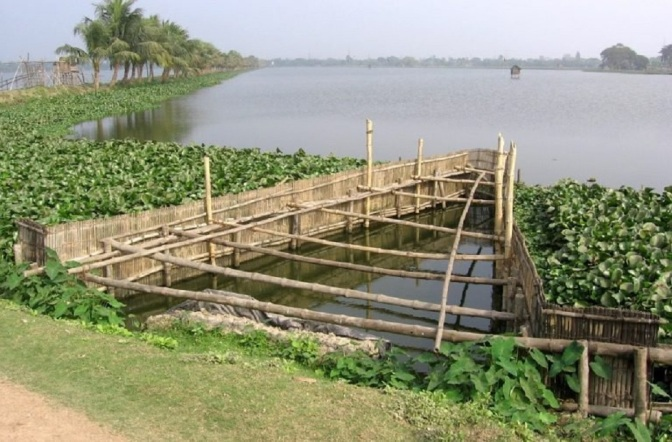 Natural Wetland in India Filters 198 Million Gallons of Waste Every Day Without Chemicals