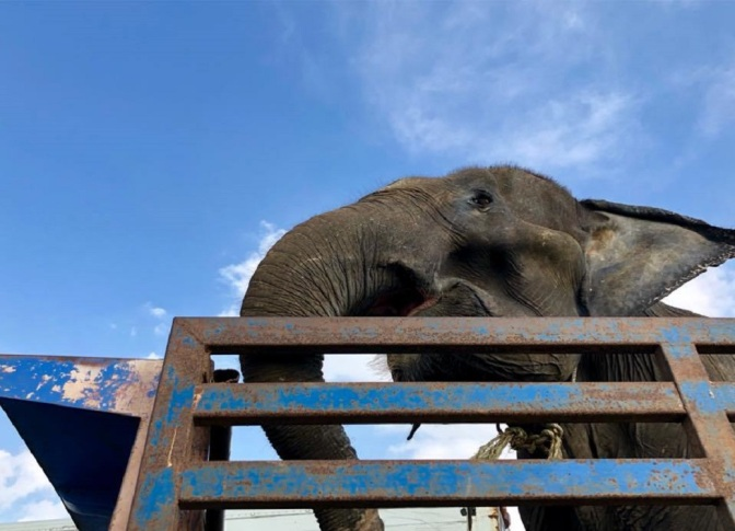 Malnourished, 55-Year-Old Elephant Tied To Tree Finally Rescued By Volunteers