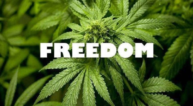 Stand Up for Cannabis – Stand Up for Freedom! Stand-up-for-cannabis-stand-up-for-freedom-1