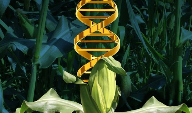 Humanity Has Become One Massive Genetic Experiment: What Everyone Should Know About GMOs