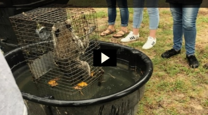 Teacher Had Students Drown Live Raccoons In Class