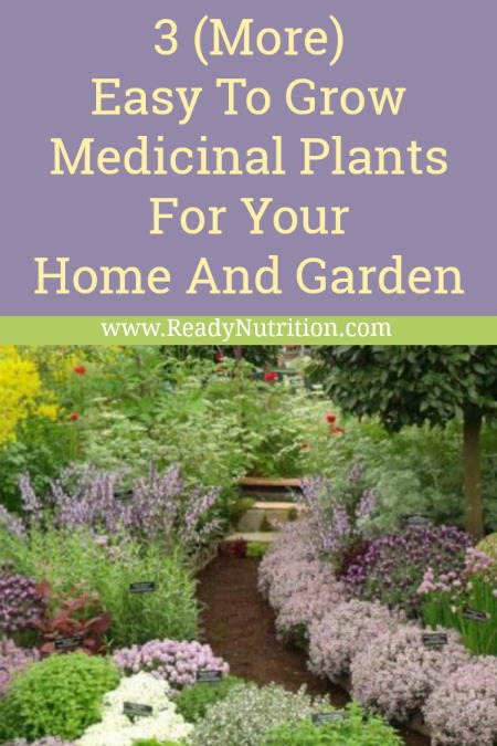 ready-nutrition-3-more-herbs-to-add-to-your-home-garden