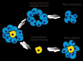 cannabis-cancer-stem-cell-350x260